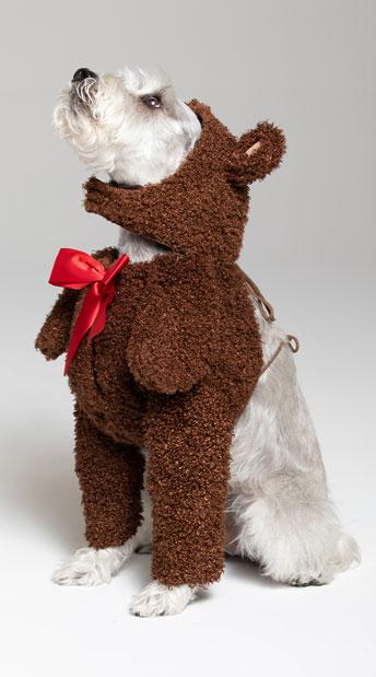 Teddy Bear Dog Costume - Brown
