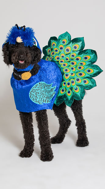 Pretty as a Peacock Dog Costume - Multi