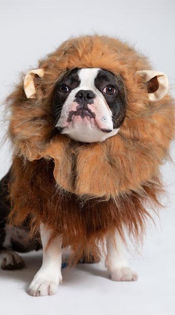 Jungle Bark Dog Costume - Brown