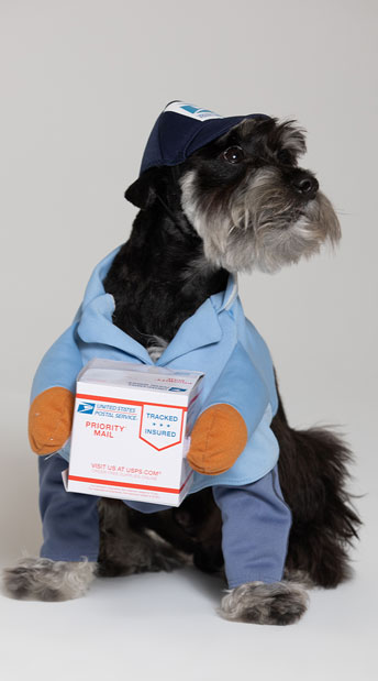 US Mail Carrier Pup Costume - Blue