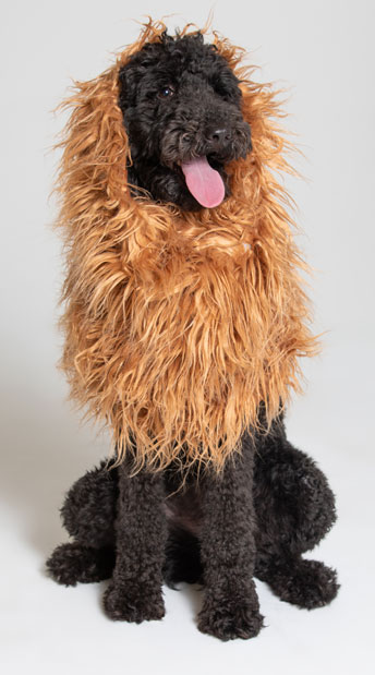 Large Dog Lion Mane Costume - As Shown
