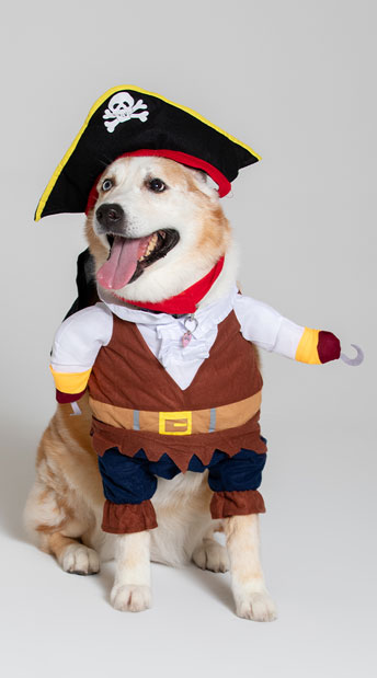 Pirate Pet Costume - As Shown