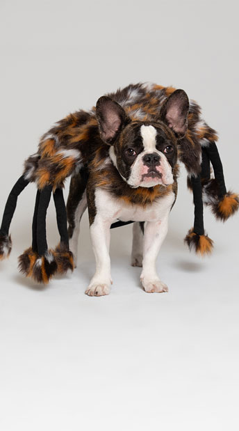 Scary Spider Small Pet Costume - As Shown