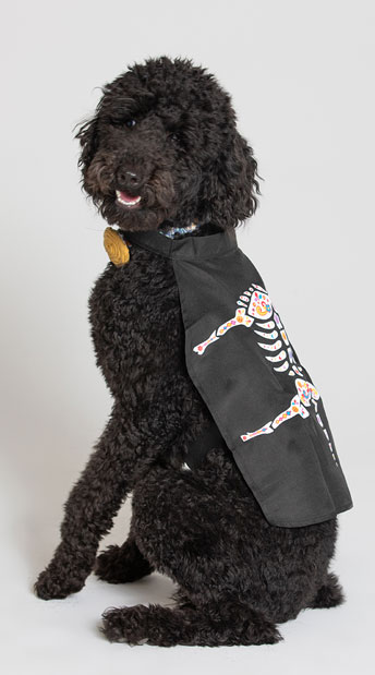 Day of the Dead Dog Cape Costume - As Shown