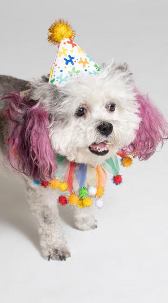 Celebration Pet Costume - As Shown