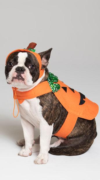 Pumpkin Pet Harness Costume - As Shown