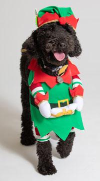Jingle Elf Dog Costume - Green/Red