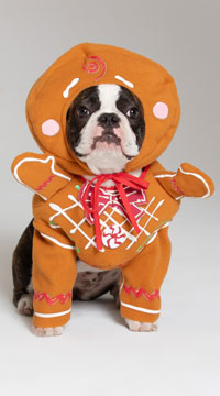 Gingerbread Pawson Dog Costume - Brown