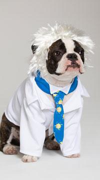 Al-bark Einstein Dog Costume - White/Blue