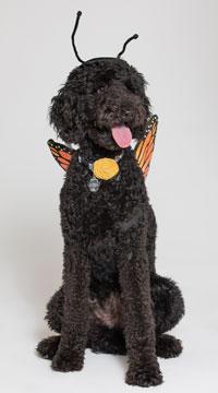 Monarch Butterfly Dog Costume - Black/Orange