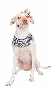 Notorious D.O.G. Pet Costume - as shown