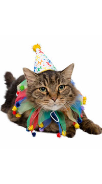 Celebration Pet Costume