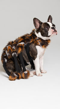 Scary Spider Small Pet Costume