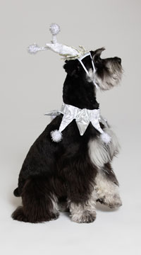 Silver Snowflake Dog Costume