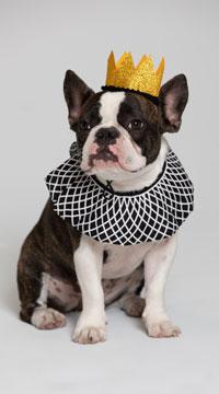 Notorious D.O.G. Pet Costume