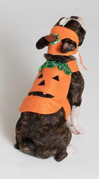 Pumpkin Pet Harness Costume